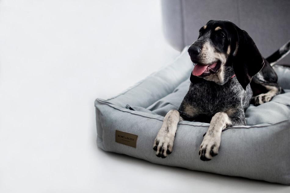 OrganicPet allergivenlig hundeseng i lysegrå