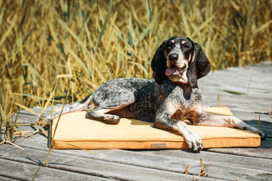 Hundemåtte i lækker honninggul farve fra Bowl&Bone, som er så glade for dyrs velfærd