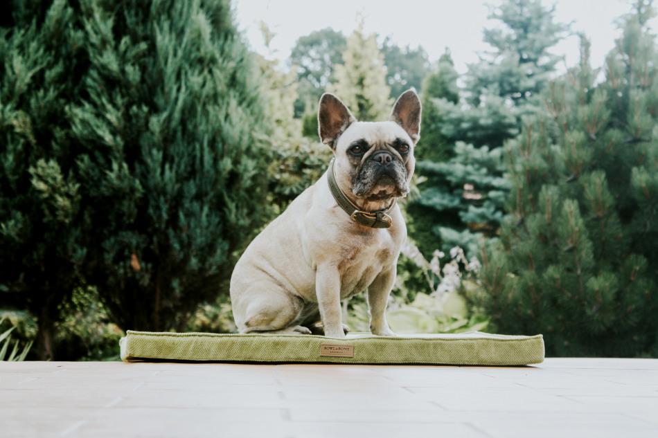 Bowl&Bone Republic hundemåtte i grøn