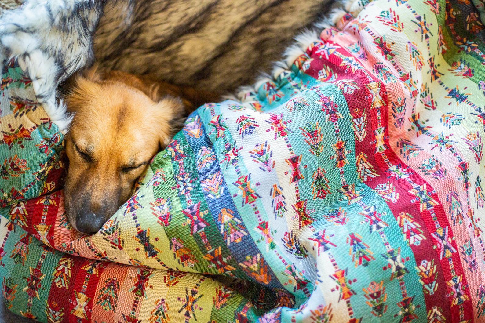 Hundesovepose i etnisk stof og pelsindtræk som skaber tryghed for din hund
