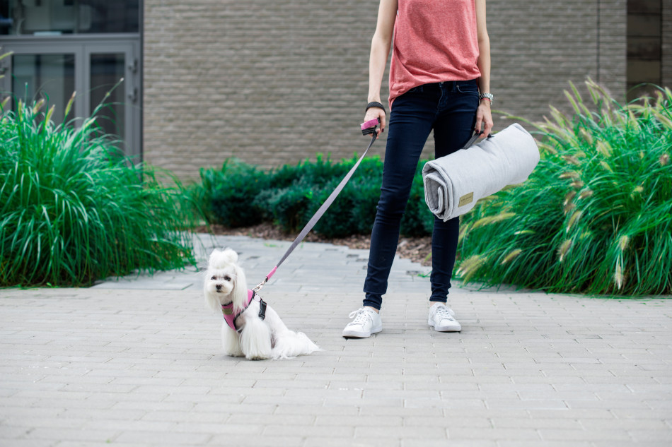 Ud-at-gå-tur hundetransportmåtte til rejsen - Bowl&Bone Republic